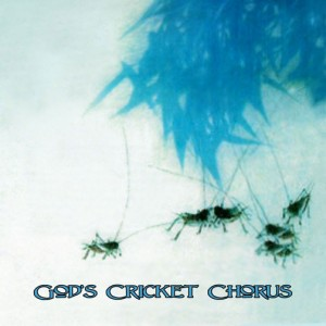 cricket-cover